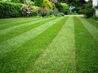 Australia's Biggest Artificial Turf And Synthetic Grass Suppliers Are Field Turf!